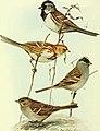 Bird lore (1913) (14562408859).jpg