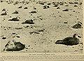 Bird lore (1918) (14568535250).jpg