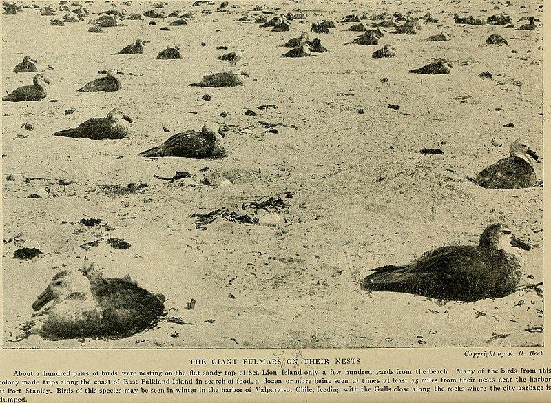 File:Bird lore (1918) (14568535250).jpg