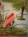 Birds and nature in natural colors - being a scientific and popular treatise on four hundred birds of the United States and Canada (1913) (14565822807).jpg