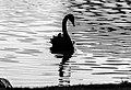 Birds ibira-5.jpg