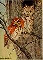 Birds of North Carolina (1919) (14732262496).jpg