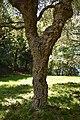 Bisuschio - Villa Cicogna Mozzoni 0094.JPG