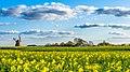 Bjerre Windmill Stenderup Denmark Landscape Photography (108270769).jpeg