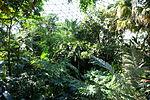 Bloedel Floral Conservatory, Queen Elizabeth Park - Vancouver, Canada - DSC07477.JPG