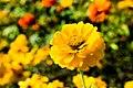 Bloomy 4 (168308029).jpeg