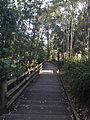 Boardwalk at Sherwood Arboretum 02.JPG