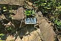 Bochum - Geologischer Garten (09) 02 ies.jpg