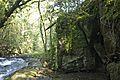 Bosque - Bertamirans - Rio Sar - 012.JPG