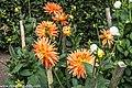 Botanic Gardens In Glasnevin (Dublin) (7951845466).jpg