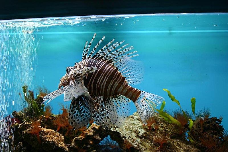 http://upload.wikimedia.org/wikipedia/commons/thumb/3/37/Botanka-akvarium.jpg/800px-Botanka-akvarium.jpg