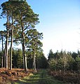 Bowmont Forest - geograph.org.uk - 106595.jpg