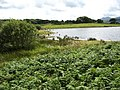 Bracken fringed lake inlet - geograph.org.uk - 511474.jpg