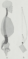 Braus 1921 81.png