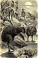 Brehms Tierleben - allgemeine Kunde des Tierreichs - mit 1800 Abbildungen im Text, 9 Karten und 180 Tafeln in Farbendruck und Holzschnitt (1891) (20226614600).jpg