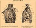 Brockhaus and Efron Encyclopedic Dictionary b18 786-0.jpg