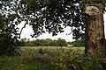 Broken Oak Bough - geograph.org.uk - 549687.jpg