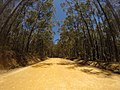 Brooman NSW 2538, Australia - panoramio (151).jpg