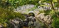 Brug over waterloop. Locatie, Chinese tuin Het Verborgen Rijk van Ming in de Hortus Haren 04.jpg