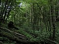 Bubovice-Srbsko - panoramio (49).jpg
