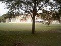 Buckingham Palace from palace gardens - 51377448341.jpg