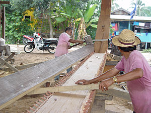 Treenail - Building the Naga Pelangi - fitting the first plank required aligning many treenails