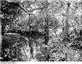 Bundesarchiv Bild 105-DOA0440, Deutsch-Ostafrika, Ostusambara, Kulimusibach.jpg