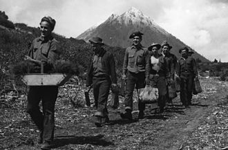 Shasta–Trinity National Forest - Civilian Conservation Corps enrollees carrying transplants to the fields, Shasta National Forest, 1930s