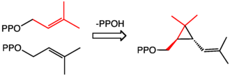 Pyrethrin - Cyclopropanation reaction producing chrysanthemyl diphosphate, an intermediate in the biosynthesis of chrysanthemic acid