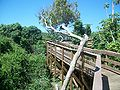 CNS Turtle Mound boardwalk05.jpg