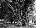 COLLECTIE TROPENMUSEUM Een markt bij een waringinboom. TMnr 60007575.jpg