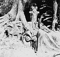 COLLECTIE TROPENMUSEUM Sculpturen rond een boom bij Ojubo Osogbo een rivierheiligdom gewijd aan de godin Osun TMnr 20014553.jpg