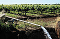 CSIRO ScienceImage 4706 Vineyard tile drainage pump discharging water into drainage channel Griffith NSW.jpg