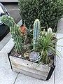Cactus Box 2 2017-10-22.jpg