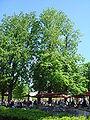 Cafe de Pomone Jardin des Tuileries.jpg