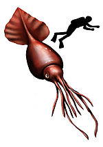 colossal squid simple english wikipedia the free