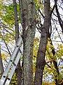 Camden, ME 04843, USA - panoramio (11).jpg