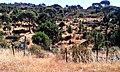 Camino por los pinares 3 (ruta Daganzo-Narros) - panoramio.jpg