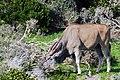 Cape Town 2012 05 16 0029 (7365150844).jpg