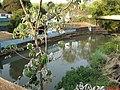 Captação de água do SAAEJ no Córrego Rico - Rod. Brig. Faria Lima - panoramio.jpg