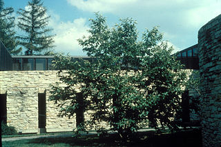 <i>Castanea mollissima</i> Species of tree