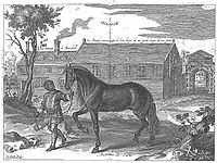 Cavendish - L'Art de dresser les chevaux, 1737-page044.jpg
