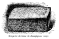 Champignon briquette blanc Vilmorin-Andrieux 1904.png