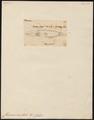 Channa orientalis - 1700-1880 - Print - Iconographia Zoologica - Special Collections University of Amsterdam - UBA01 IZ13800087.tif