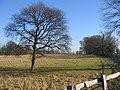 Charlecote Park - geograph.org.uk - 120890.jpg