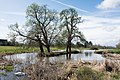 Charlecote Park - the lake.jpg