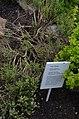 Chemnitz botanischer garten pflanzenkunde.JPG