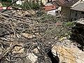 Chute de rochers à Saint-Rambert-en-Bugey en mars 2020 (photo de juin 2020) - 8.jpg