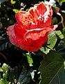 Close Up Flowers (48130625046).jpg