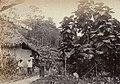 Collectie Nationaal Museum van Wereldculturen TM-60062192 Arbeiders voor een woning Trinidad fotograaf niet bekend.jpg